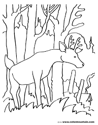 big buck coloring page create a printout or activity
