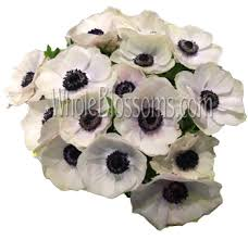 anemones flowers white anemones with black centers