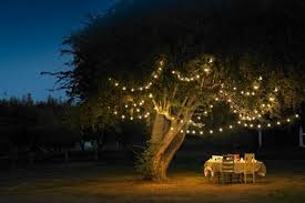 a canopy of lights an outside floor magical