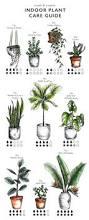 illustrated indoor plant care watering guide garden pinterest