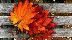 fall pumpkin wallpaper hd autumn wallpaper hd pixelstalk net