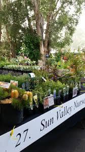 australian native plants nursery sunvalley4 jpg