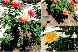 the ringling gardens u2013 love elizabeth