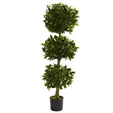 Topiary Plants Online - topiary plants amazon com