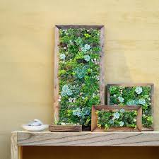 wall ideas hanging wall planters indoor hanging wall planters