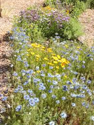 california native plants list under the solano sun agriculture and natural resources blogs