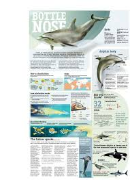 facts about bottlenose dolphin a great site for info is http