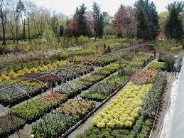 Botanical Garden Chapel Hill by Home
