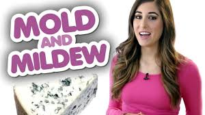4 things you should know about mold u0026 mildew clean my space