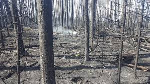 Largest Wildfire In Alberta History by Here U0027s What The Science Really Says About Fort Mcmurray And