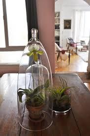 Indoor Garden Containers - 165 best terrariums images on pinterest gardening plants and home