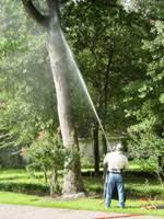 houston tree service services