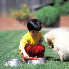 How To Get A Comfort Dog Choosing A Pet For Your Family What To Expect