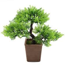 amazon com bonsai live indoor plants grocery u0026 gourmet food