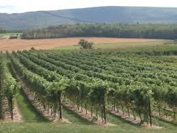 Grape Trellis For Sale Why Should We Care About Under Trellis Cover Crops Wine U0026 Grapes U