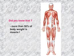 Anatomy And Physiology The Muscular System Anatomy U0026 Physiology I Unit 8 Muscular System Review Ppt Download