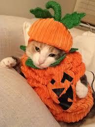 Kitten Halloween Costumes Pet 258 Halloween Cats Images Happy Halloween