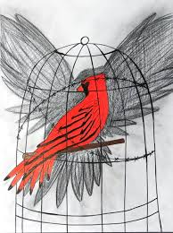 cardinal drawings on paigeeworld pictures of cardinal paigeeworld