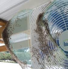 10 weird yet effective ways to keep mosquitoes away pest hacks