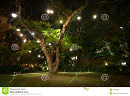 large hawaiian tree with lights on it at stock photo image