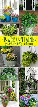 Container Gardening Ideas Container Gardening Ideas