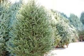 picture of recycle christmas tree lights home depot outdoor furniture