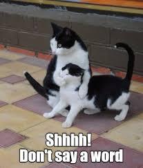 Shh Meme - shh lolcats lol cat memes funny cats funny cat pictures