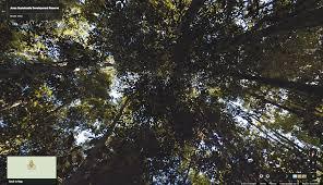 Amazon Maps Google Lat Long Zipline Through The Amazon Forest With Street View