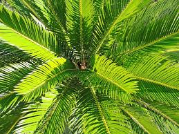 free images branch palm tree leaf flower green jungle