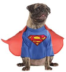 Halloween Costumes Dog Halloween Costumes Halloween Costumes Dogs