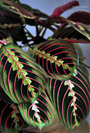 plants that don t need sunlight to grow 10 plants that don t need sunlight to grow prayer plant plants