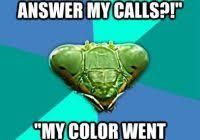 Y U No Reply Meme - why you no reply meme 100 images why you no reply me why you no