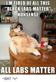 Black Lab Meme - black labs matter all labs matter meme labs best of the funny meme