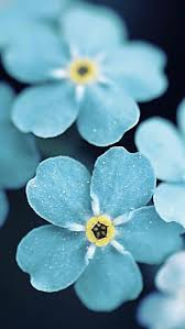 Blue Flower Backgrounds - 74 best wallpaper images on pinterest iphone backgrounds