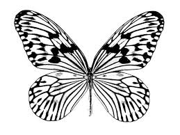 realistic butterfly drawing coloring download u0026 print