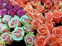 Flowers Wholesale Wholesale Cut Flowers Fresh Roses And Carnations Bulk Cut