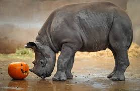 animals halloween chester zoo u0027s animals get in the halloween spirit liverpool echo