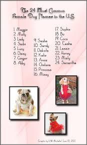 australian shepherd dog names the 24 most common female dog names in the u s a doggie bloggie