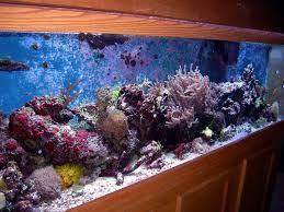 furniture design fish aquarium in stair wooden furniture