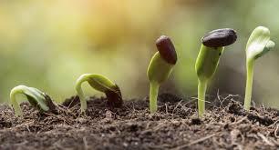 native plant nursery sydney bunya native nursery u2013 our aim is to provide a diverse and