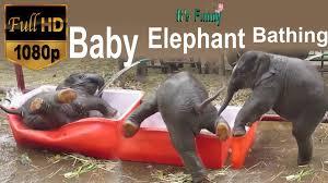funny baby elephant bathing hd 1080p video u0027s pinterest