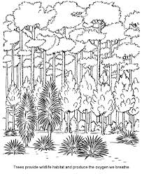 rainforest pictures to color kids coloring