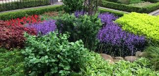 imagenes de jardines pequeños con flores consejos para diseñar y decorar jardines pequeños plantas