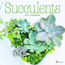 Amazon Succulents 2017 Succulents Wall Calendar Tf Publishing 9781624387395