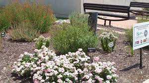 native texas plants landscaping region by region pledgetoplantsmart how the city of allen is changing the