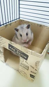 660 best adorable hamsters images on pinterest animals syrian