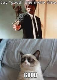 Good Meme Grumpy Cat - grumpy cat share your story general humor pinterest