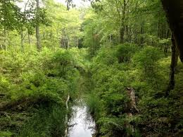 Delaware Forest images Beautiful forest of delaware water gap picture of delaware water jpg