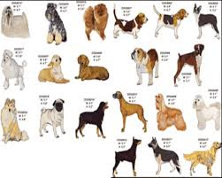 Types Of Dogs Some Types Of Dogs For Dogs Lovers