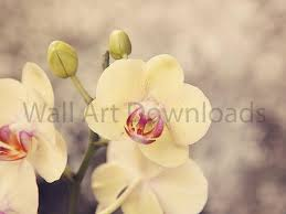 yellow orchids yellow orchids wall downloads wall botanical